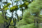 20120129-5384-nullabor_fleeting