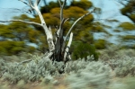 20120129-5565-nullabor_fleeting