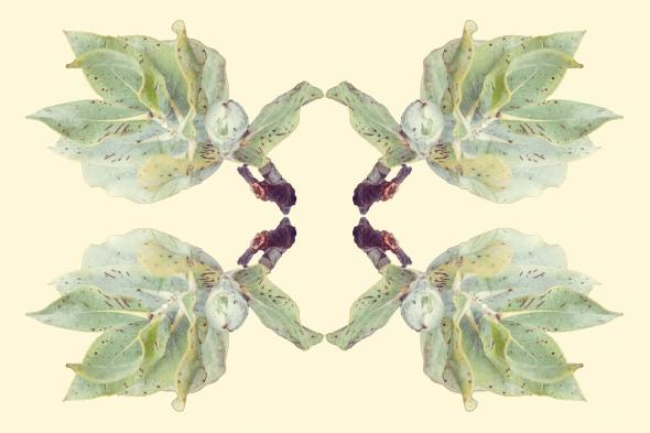 Eucalyptus Rorschach