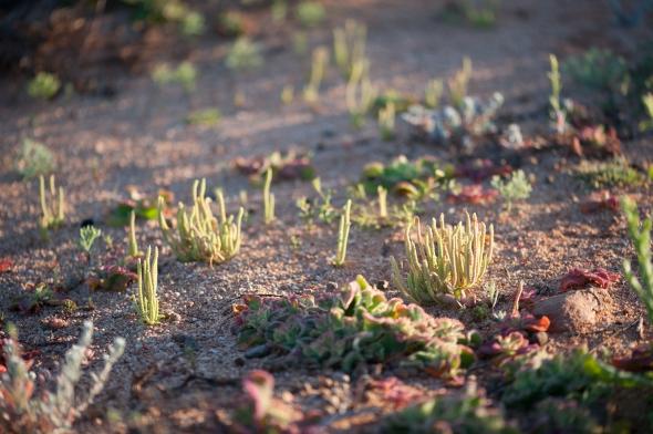 Gnaraloo dunes, 2cm miniatures