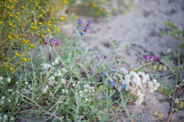 Wildflowers, Warroora Station