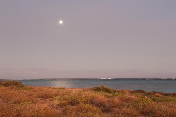 Osprey dawn