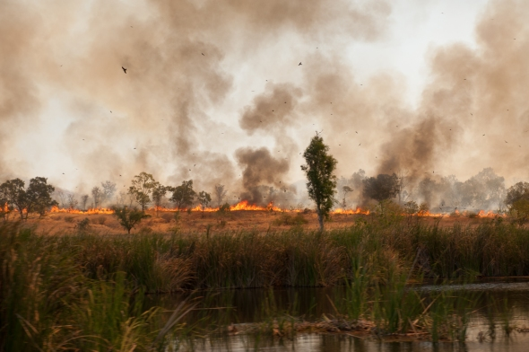 Ord River.  80% of bushfires are deliberately lit