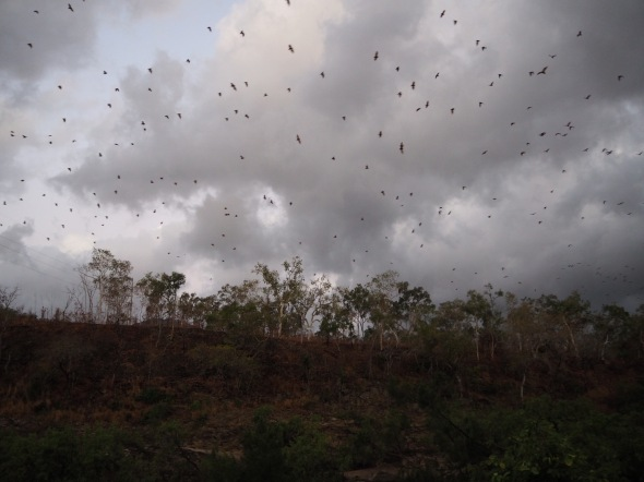 Armageddon. Thousands of fruit bats leave the gorge for their nightly feed.