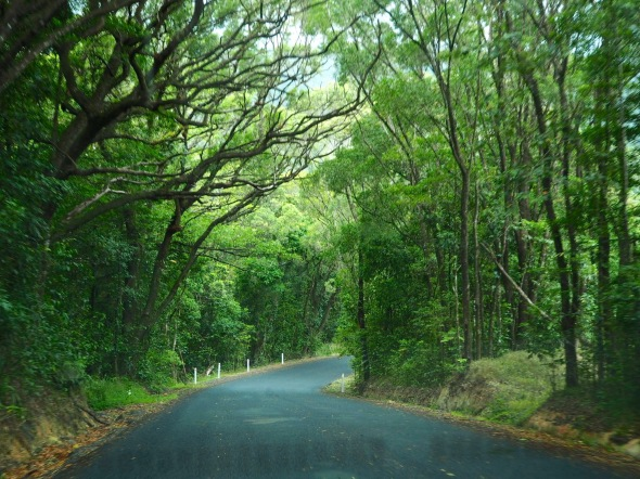 The road from Cooktown to Cairns through the Daintree and Cape Tribulation