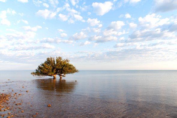 18-10-04-Giralia TRee-369