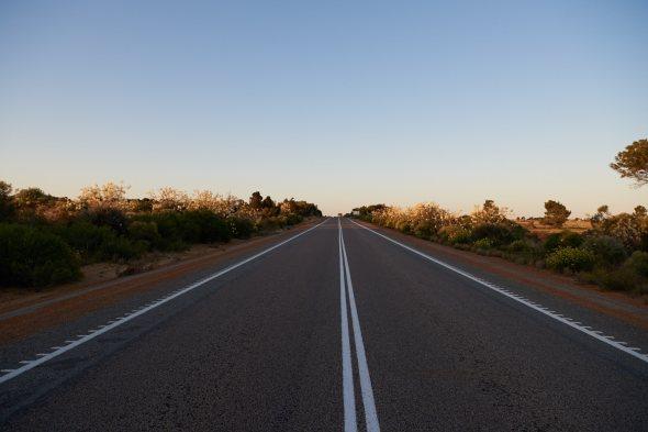 181019_Wildflower roadside_05